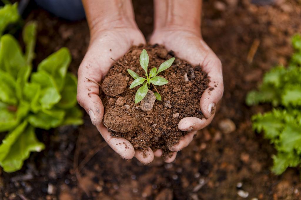 Las cosmética natural hecha a base de plantas penetra en las capas...