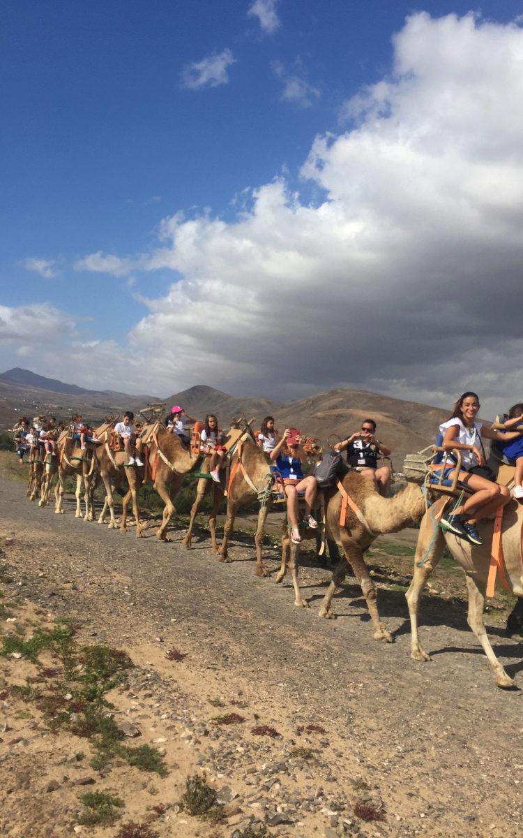 El paseo en camello fue una de las activiades que más disfrutamos.