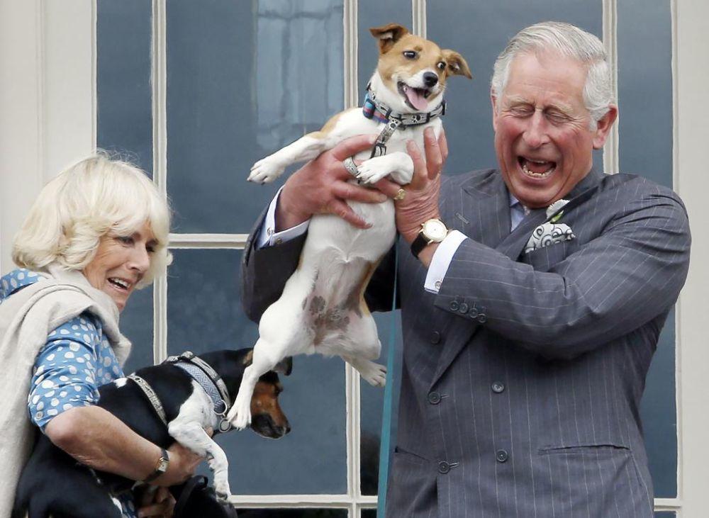 Beth y Bluebell, los Jack Russel terriers del matrimonio (2015)