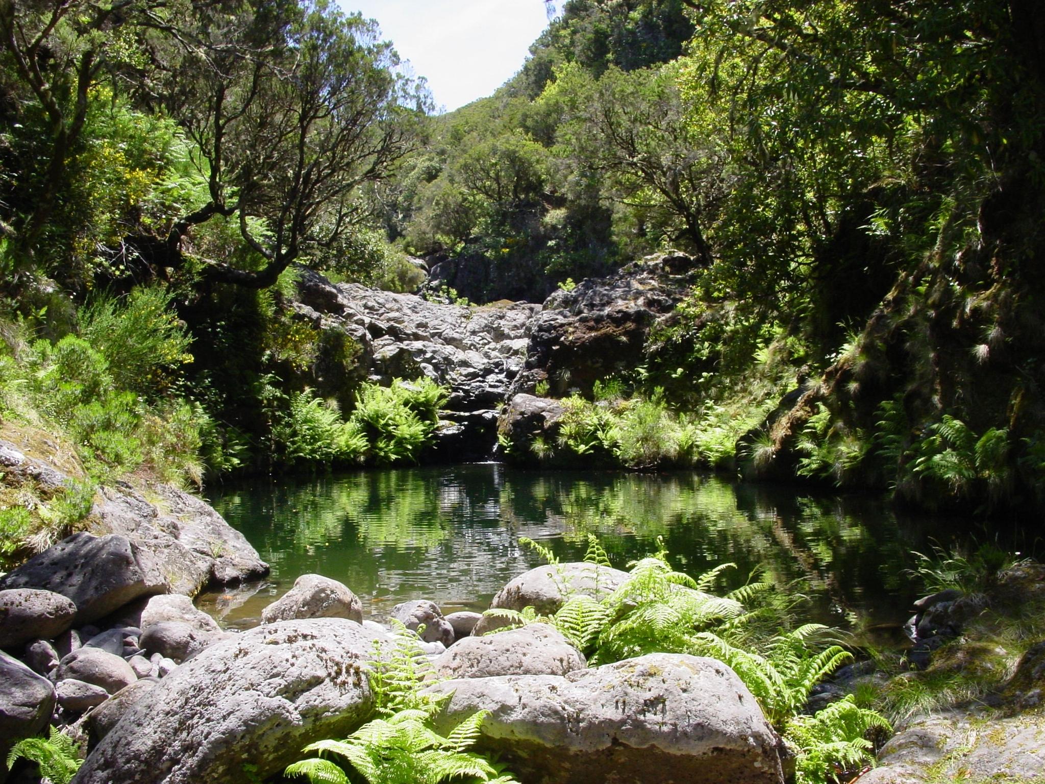 El bosque de Laurissilva, nombrado Patrimonio de la Humanidad desde...