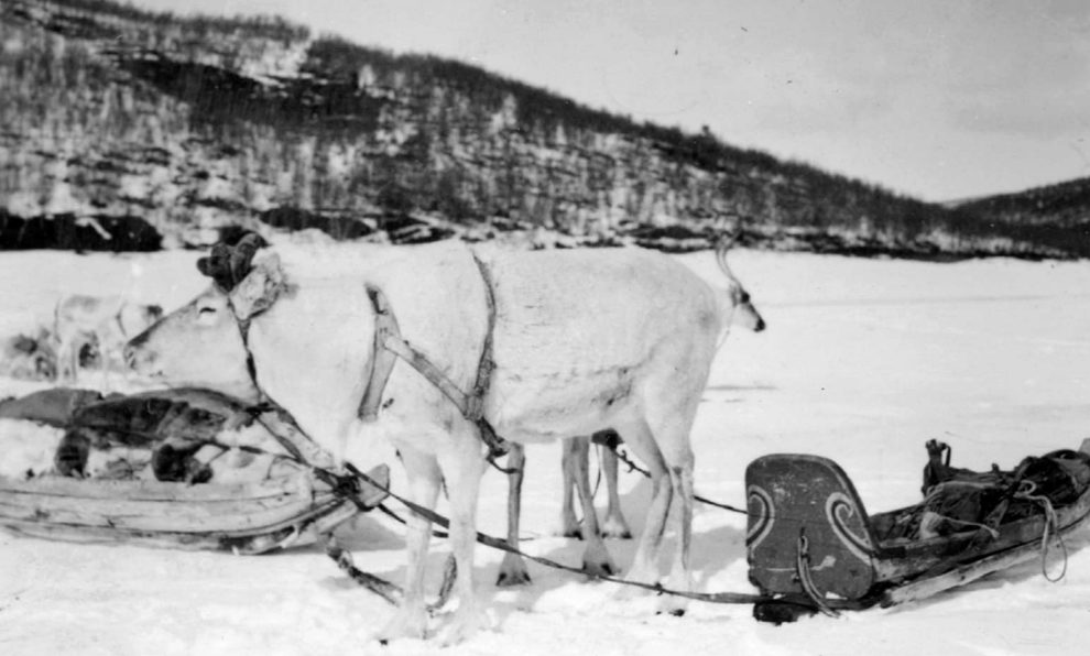 1929 - Colleras de fiesta para reno.