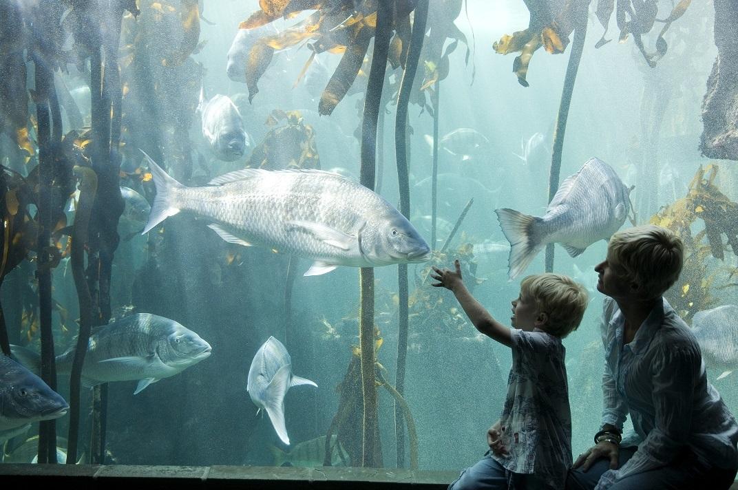 Desde avistar ballenas en Hermanus, pasando por los míticos parques...