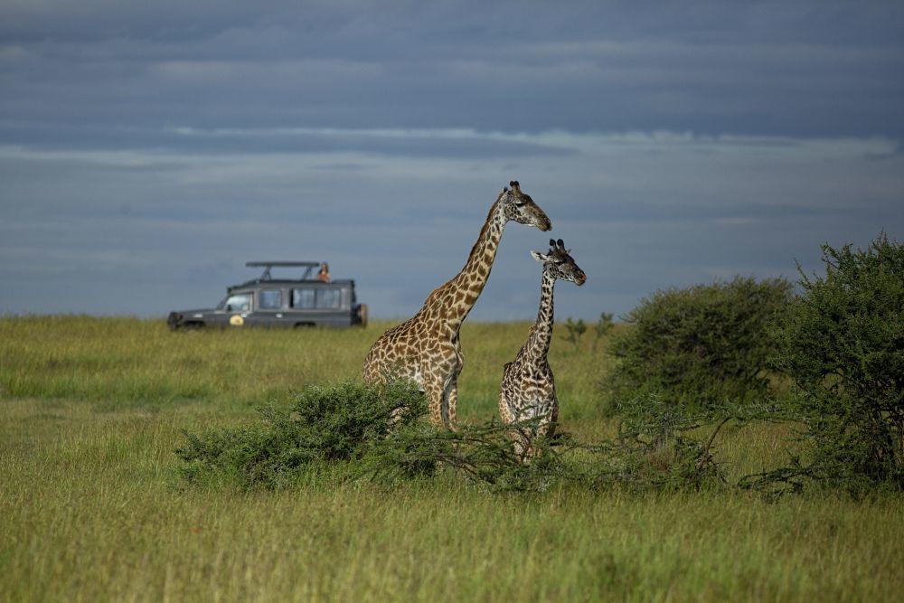 De safari con los jeeps de Ratpanat, con techo abierto.