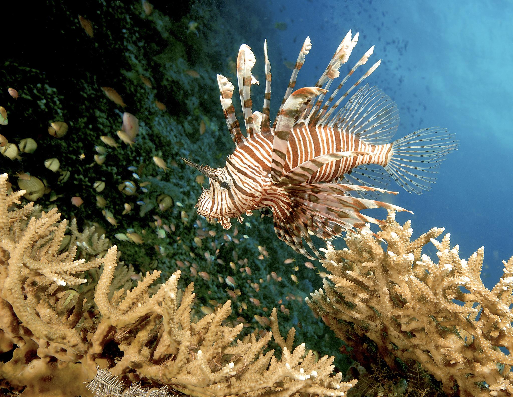Corales en Indonesia