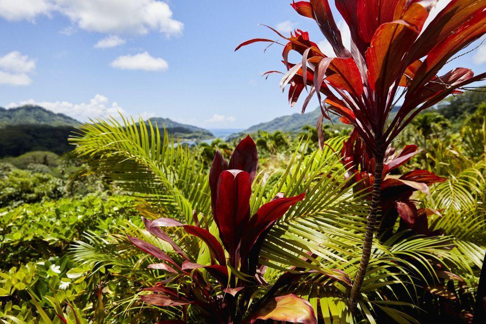 La isla de Taha'a esconde una naturaleza indómita.