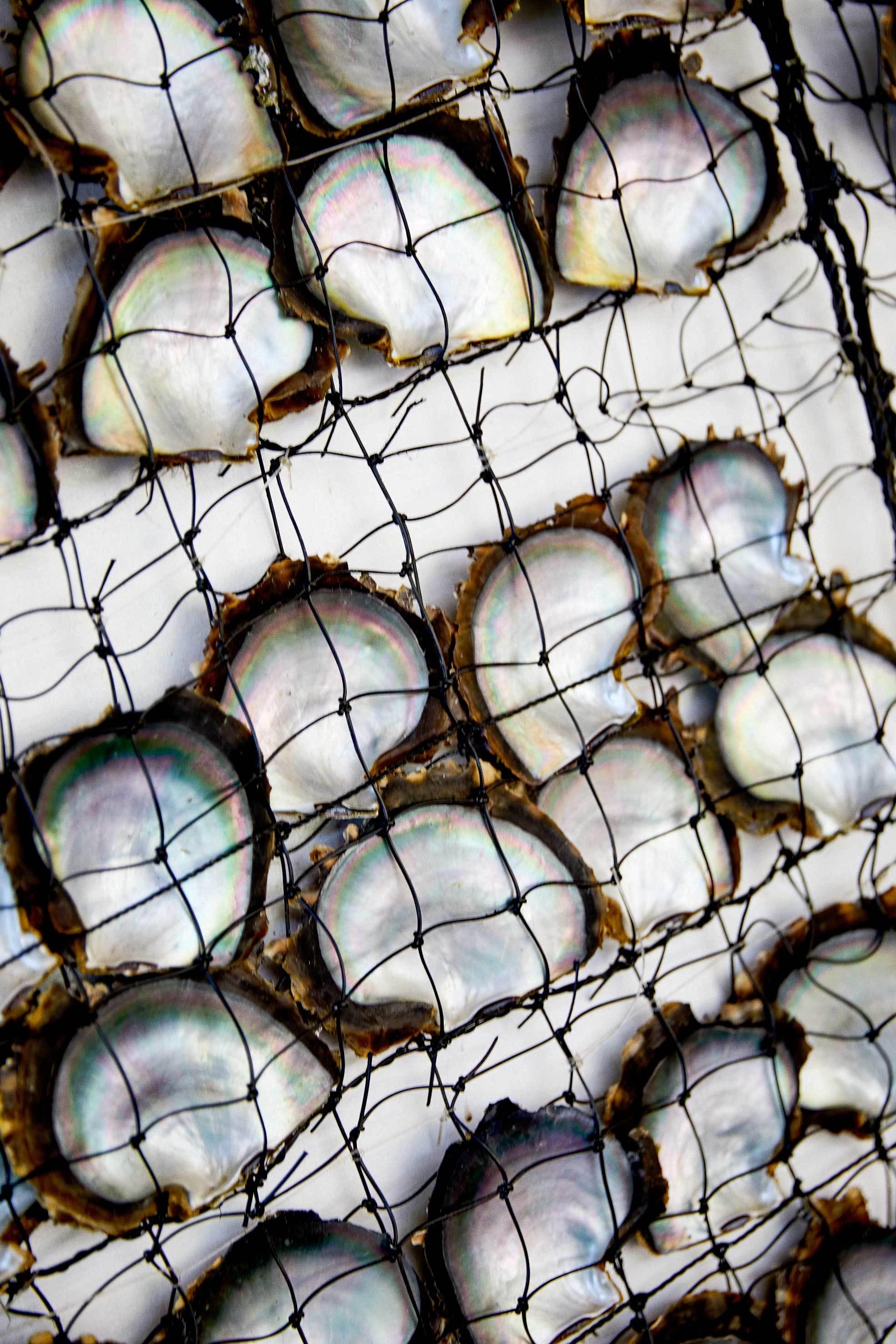 La isla de Taha'a cuenta con la mayor granja de perlas de toda la...
