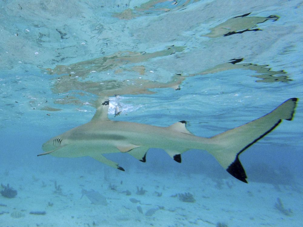La experiencia de nadar con tiburones se nos queda marcada para...