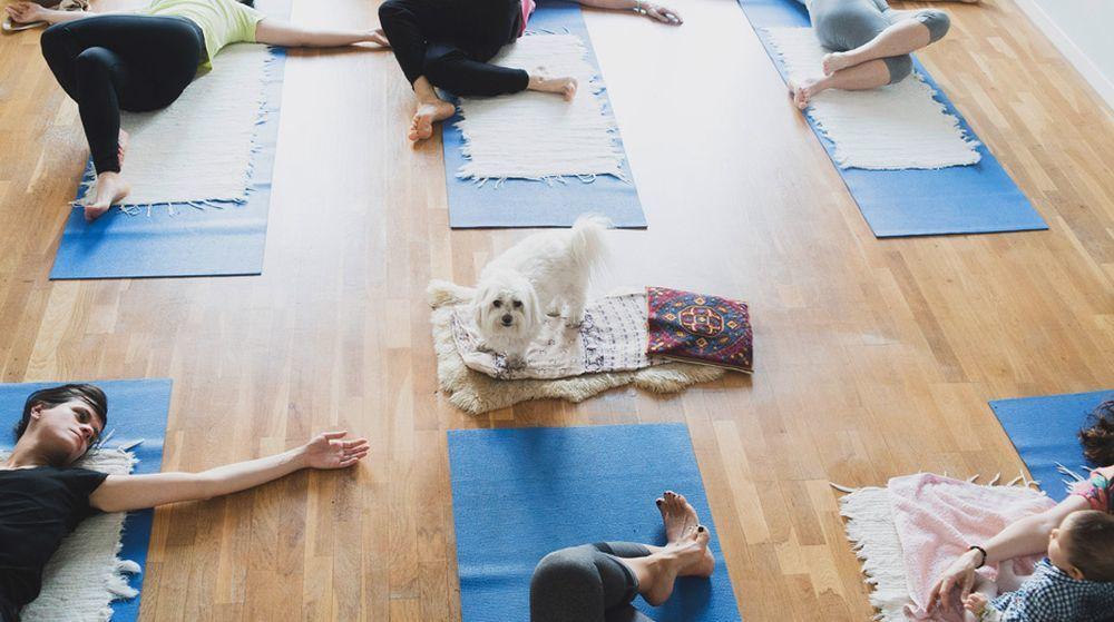 El yoga no se entiende sin el contacto. Es compartir, fluir y estar en...