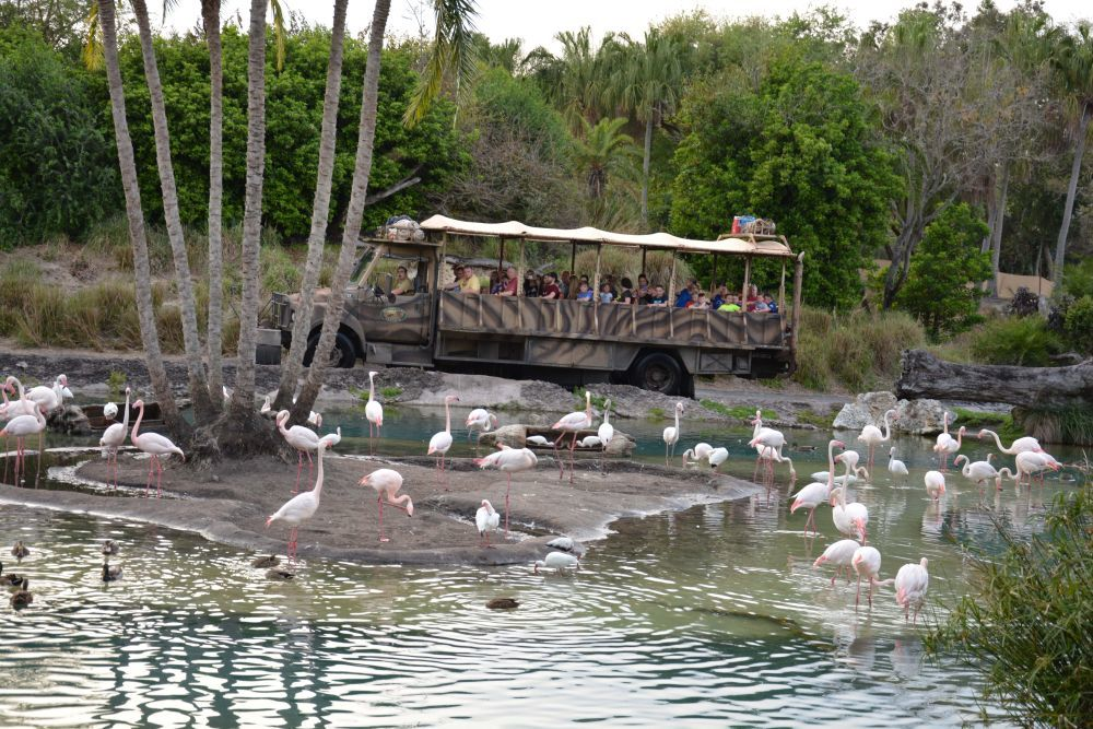 En Disney Animal Kingdom es posible hacer un safari con animales en...