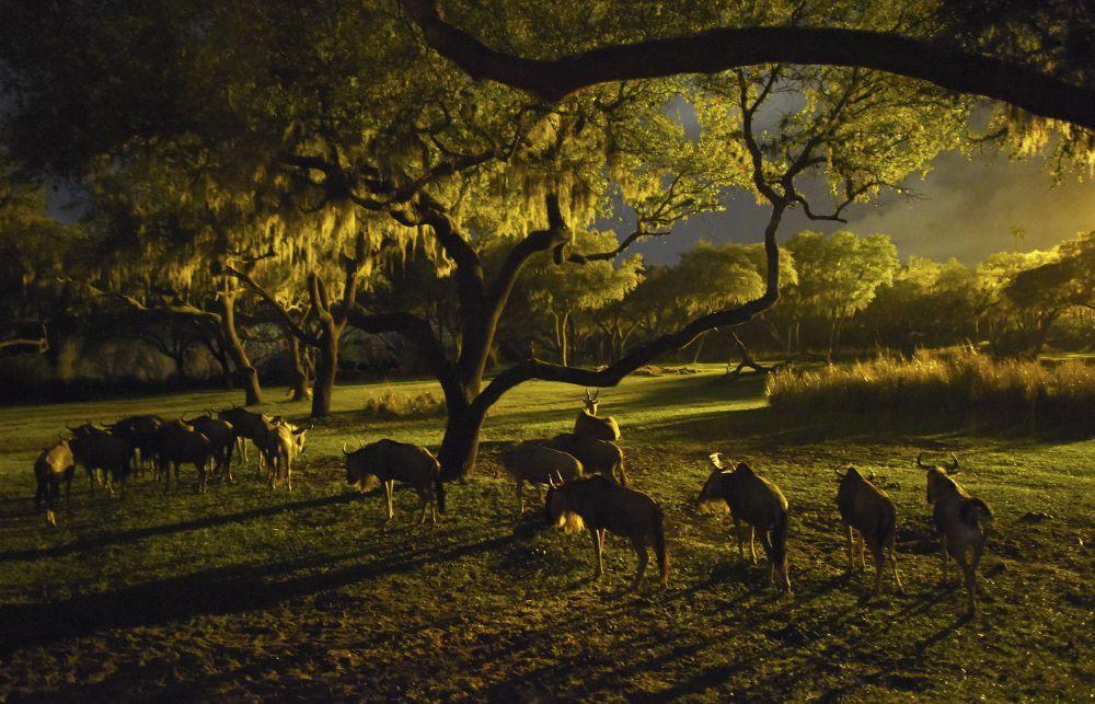 En Animal Kingdom viven más de dos mil animales.