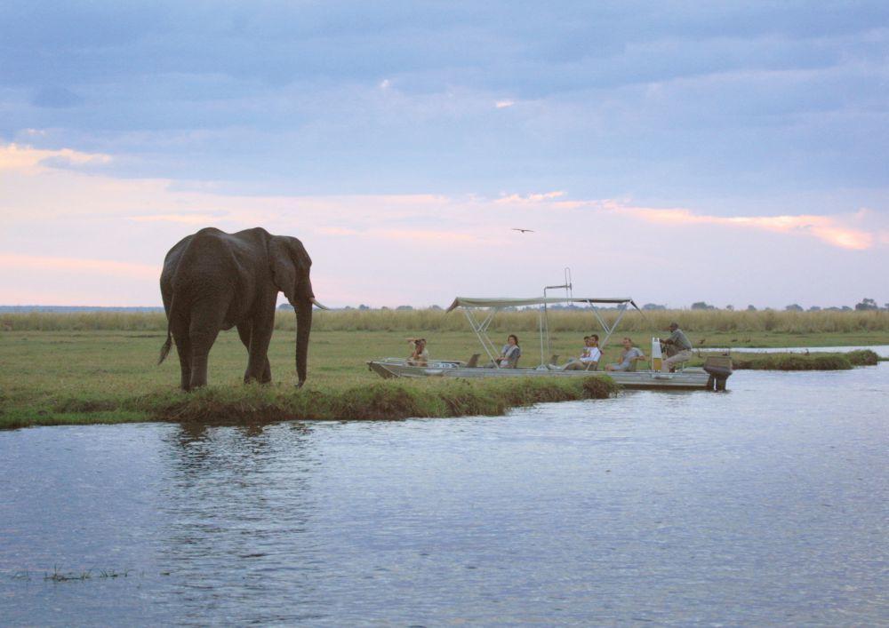 Botswana es uno de los destinos top en safaris por su gran variedad...