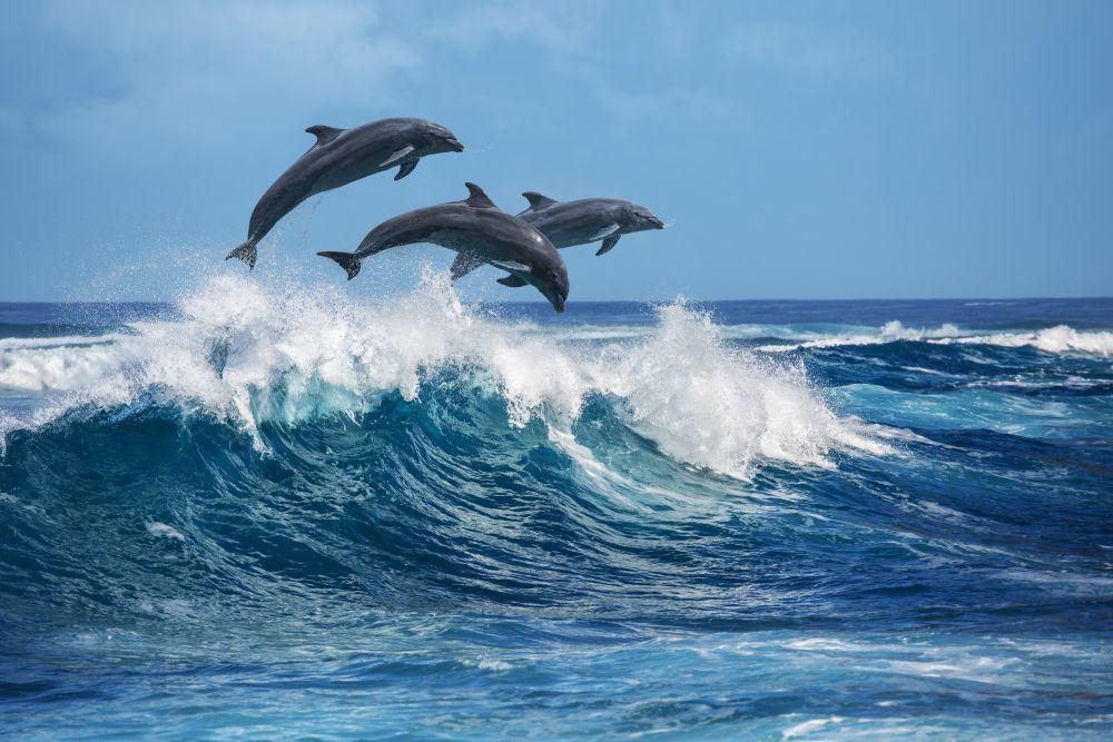 Delfines en la isla de San Miguel
