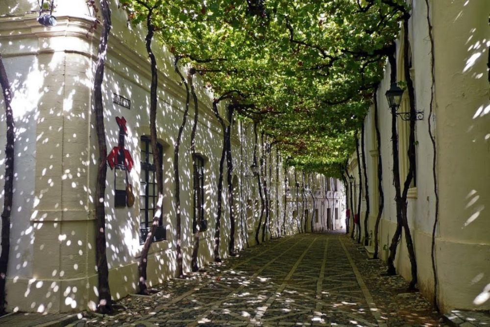 Calle interior de la bodega Tío Pepe.