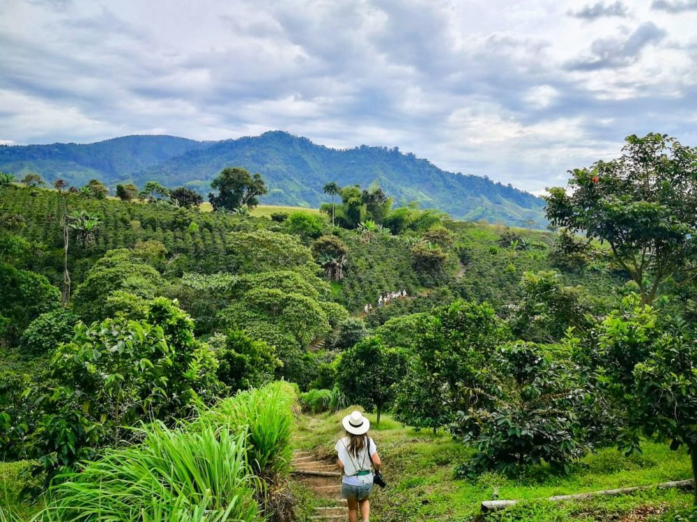 Finca del café, Colombia