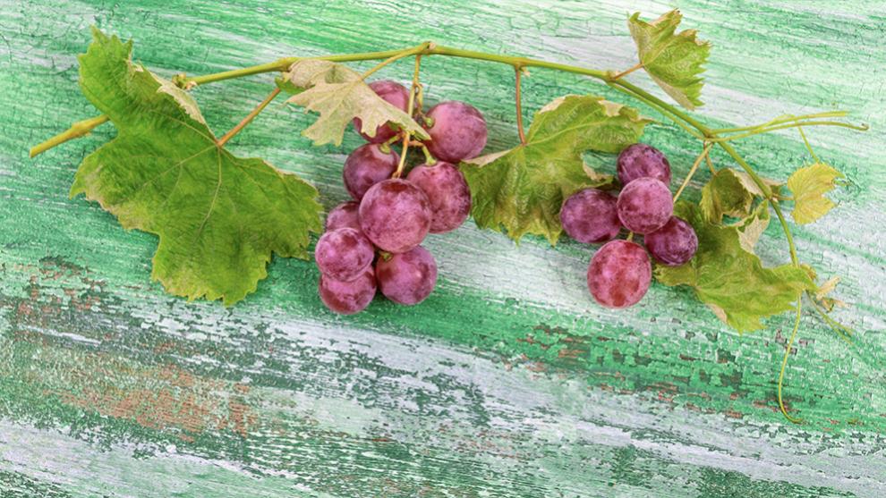 La uva muscadina es original de los Estados Unidos.