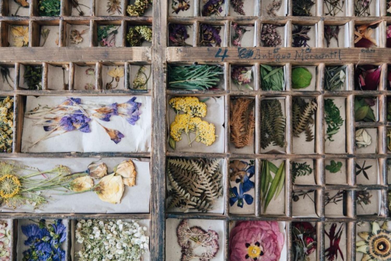Colección de flores una vez retiradas de la prensa. Taller Silvestre.