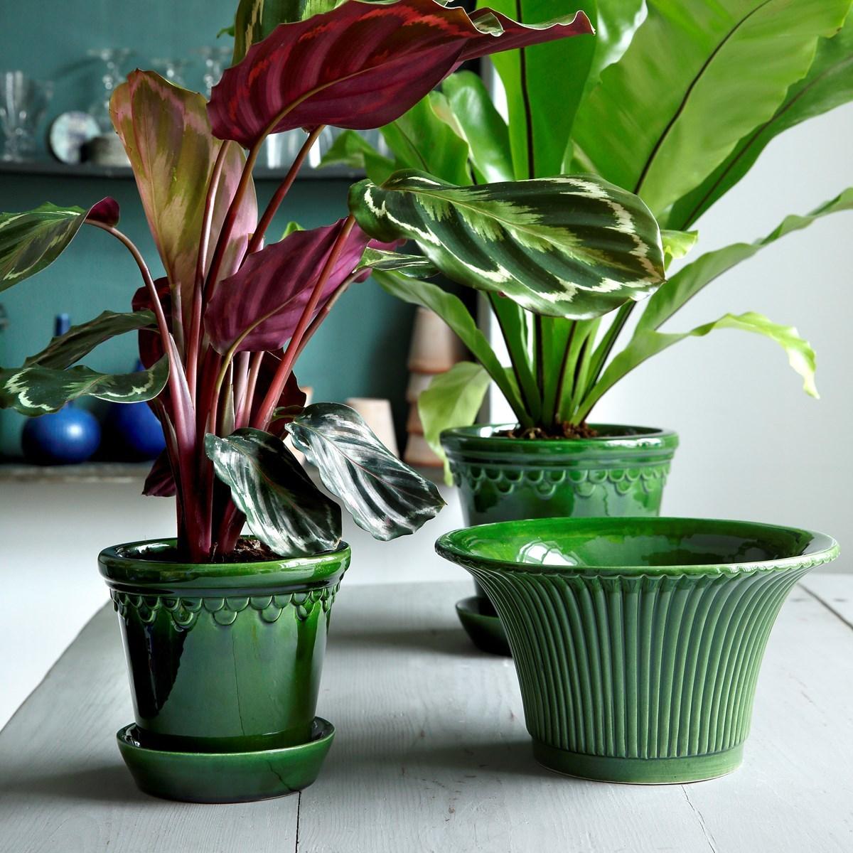 La plantas pueden ser excelentes compañeras en casa. Estos maceteros...