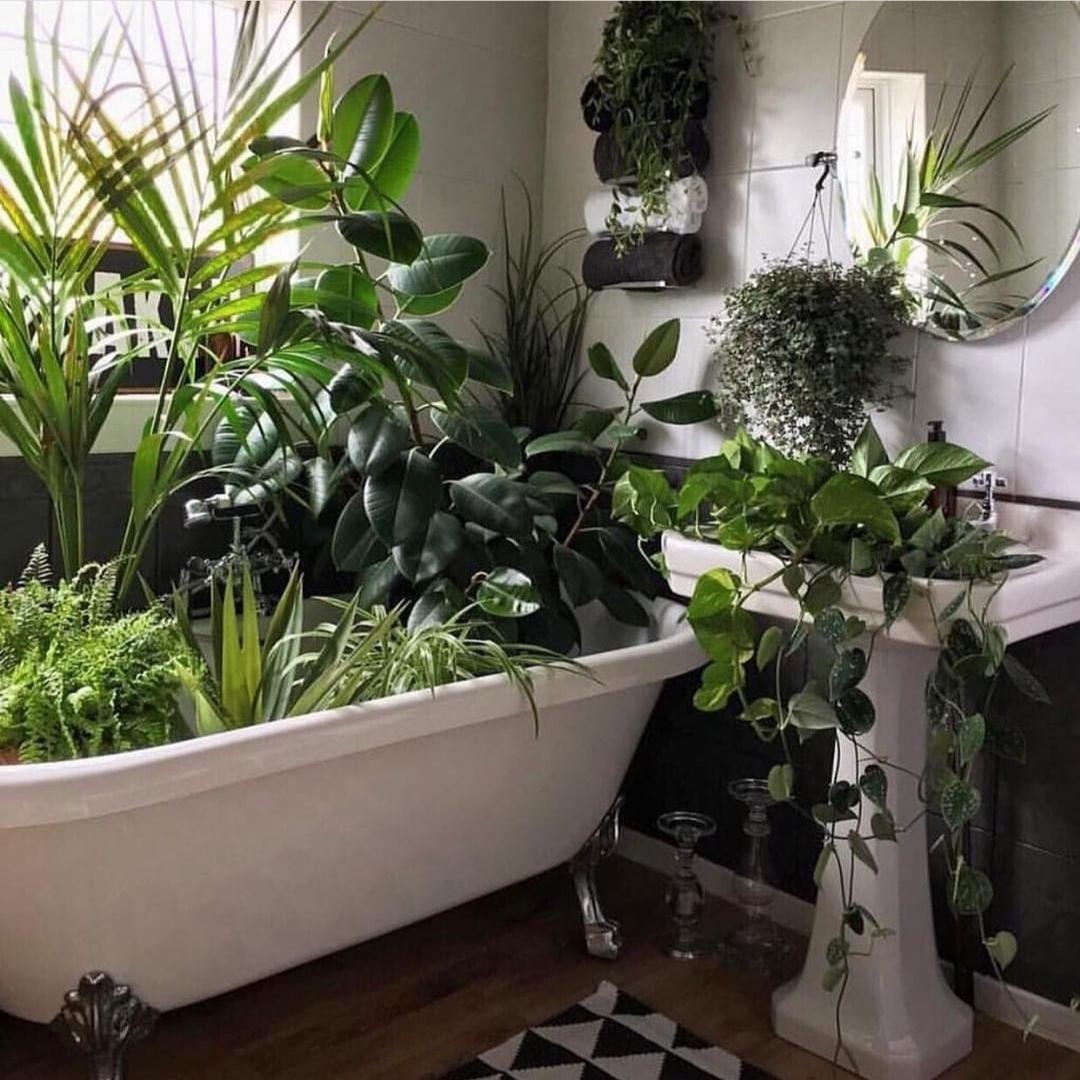 Las especies que necesitan mucha humedad como las orquídeas son...