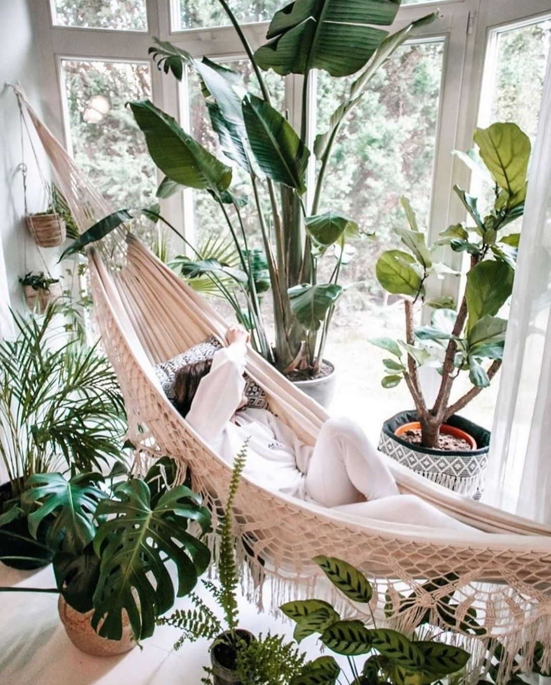 El mirador invita a crear una selva con plantas grandes y lustrosas....