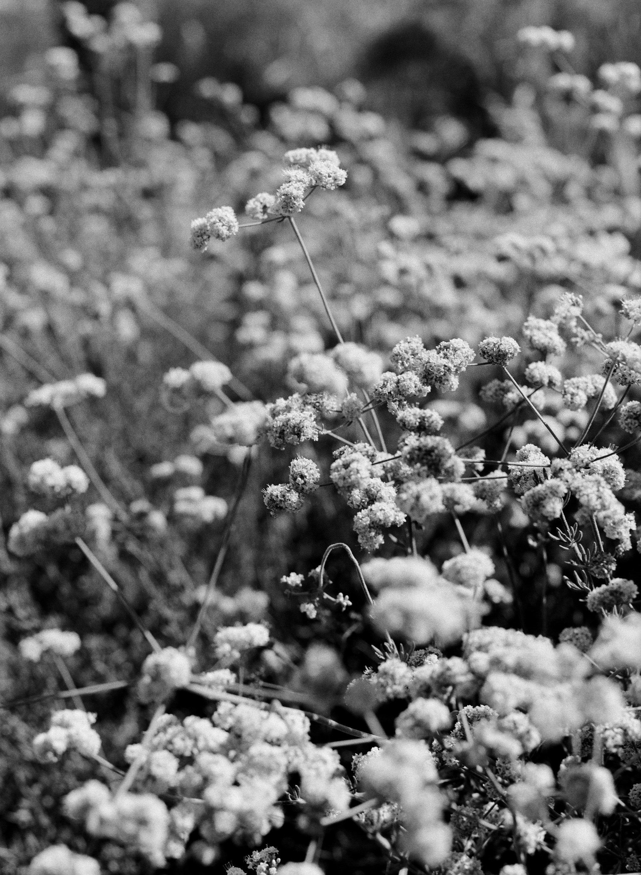 La naturaleza es su fuente  de inspiración: los colores, las formas, los olores... Foto: Shaina Mote.