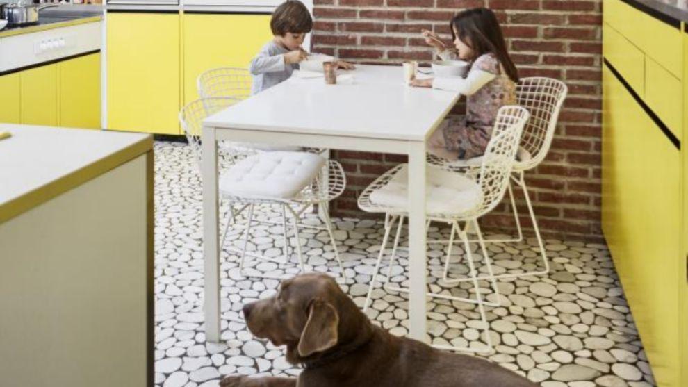 Niños con perro en cocina