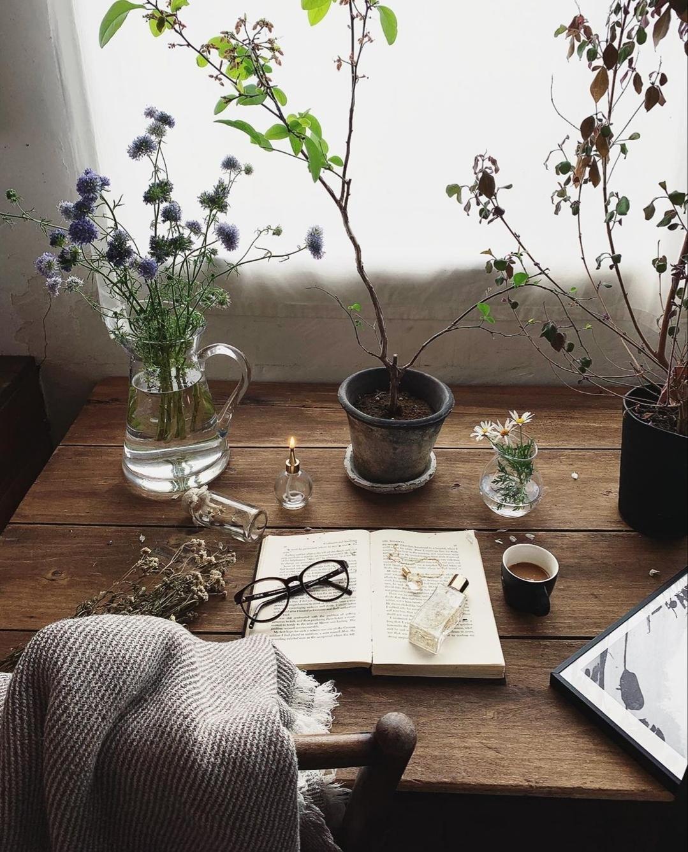 Elige para tu habitación plantas de hoja fina o suculentas y ponlas...