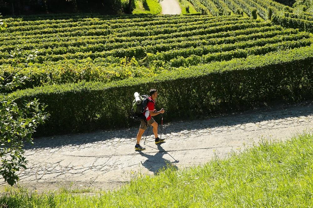 Paseo entre viñedos de txakolí.