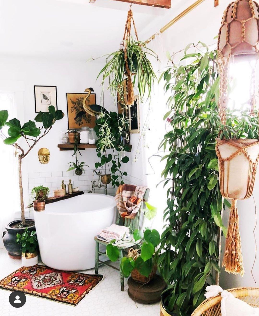 La tendencia es crear un oasis en el CUARTO DE BAÑO. Si la habitación tiene ventanas y luz natural es el espacio idóneo para helechos, esparragueras o hiedras variadas. Las Tillandsias y las Orquídeas también vivirán felices porque a todas les encanta la humedad. @theurbanjungle.