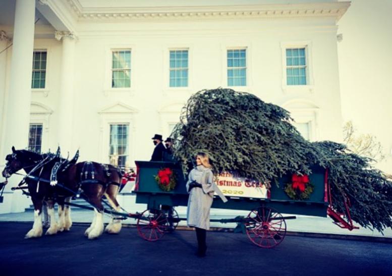 Melania recibe el árbol de Navidad