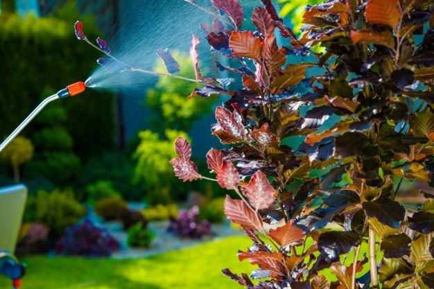 Es el momento de fumigar en aceite de invierno para prevenir los insectos.