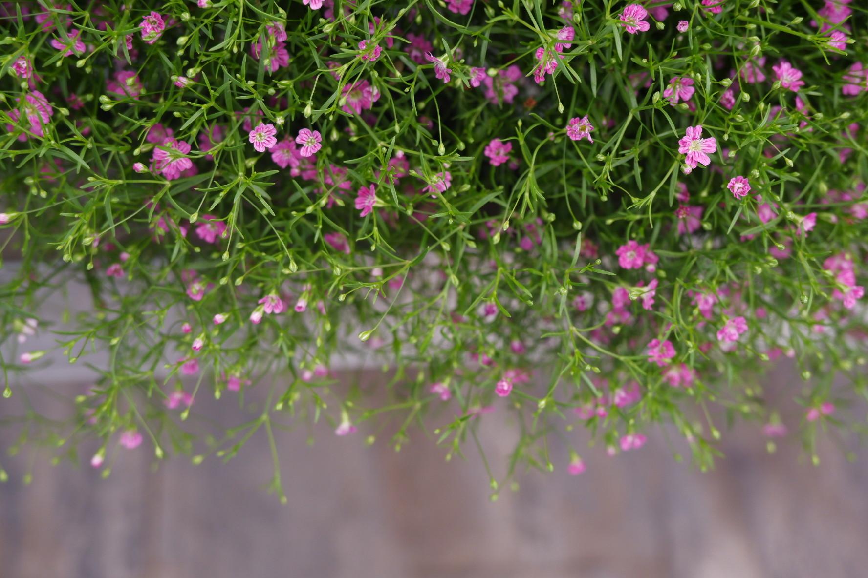 Las vivaces son algunas de las plantas que mejor se dan en las terrazas.