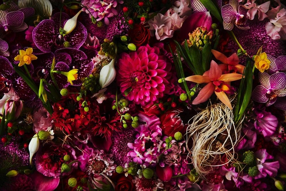 Flores de febrero de Azuma Makoto
