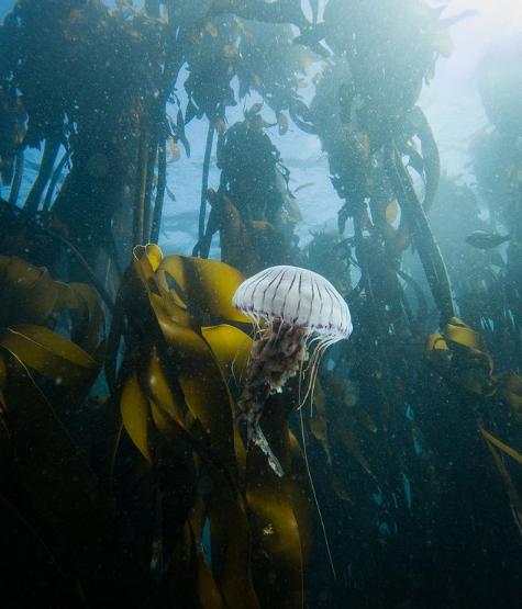 (C) Instagram Seachangeproject My octopus teacher