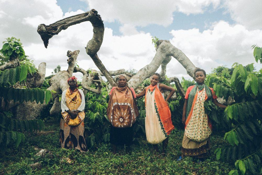 Desde el pachuli de Indonesia al sándalo de Sri Lanka, Nose es un increíble paseo que nos permite descubrir unas tierras únicas donde nacen las materias primas de los perfumes.