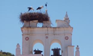 Esta es la mejor época para avistar nidos de cigueña en los...