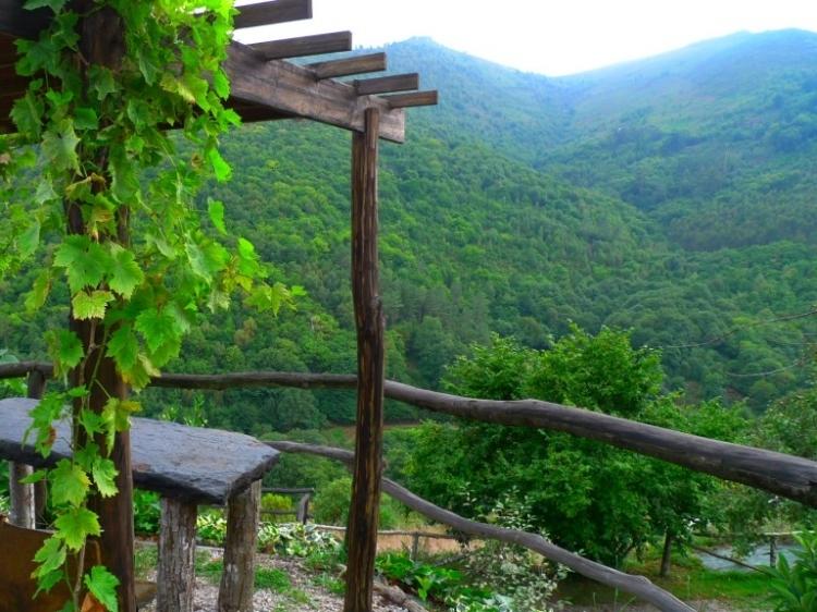 El bosque de las viñas, Boal.