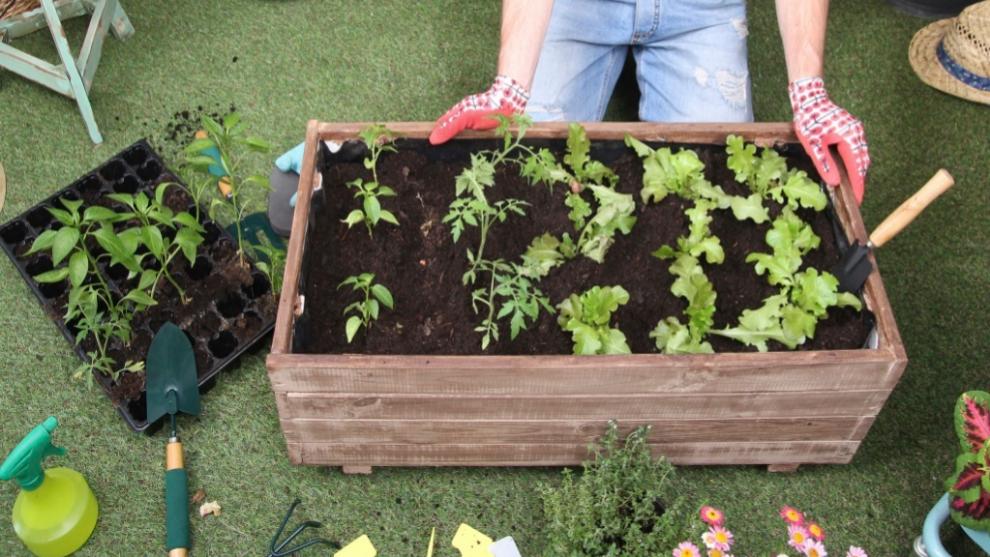 Las aromáticas necesitan luz directa y las hortalizas, más de cinco horas de sol.