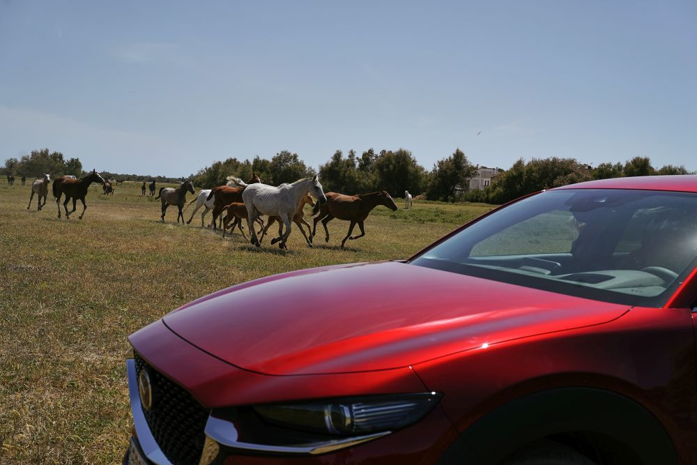 Caballos buscando descanso en Doñana.