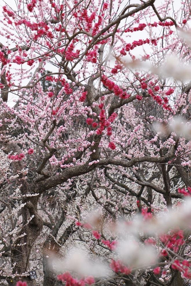 Jardín Kairakuen