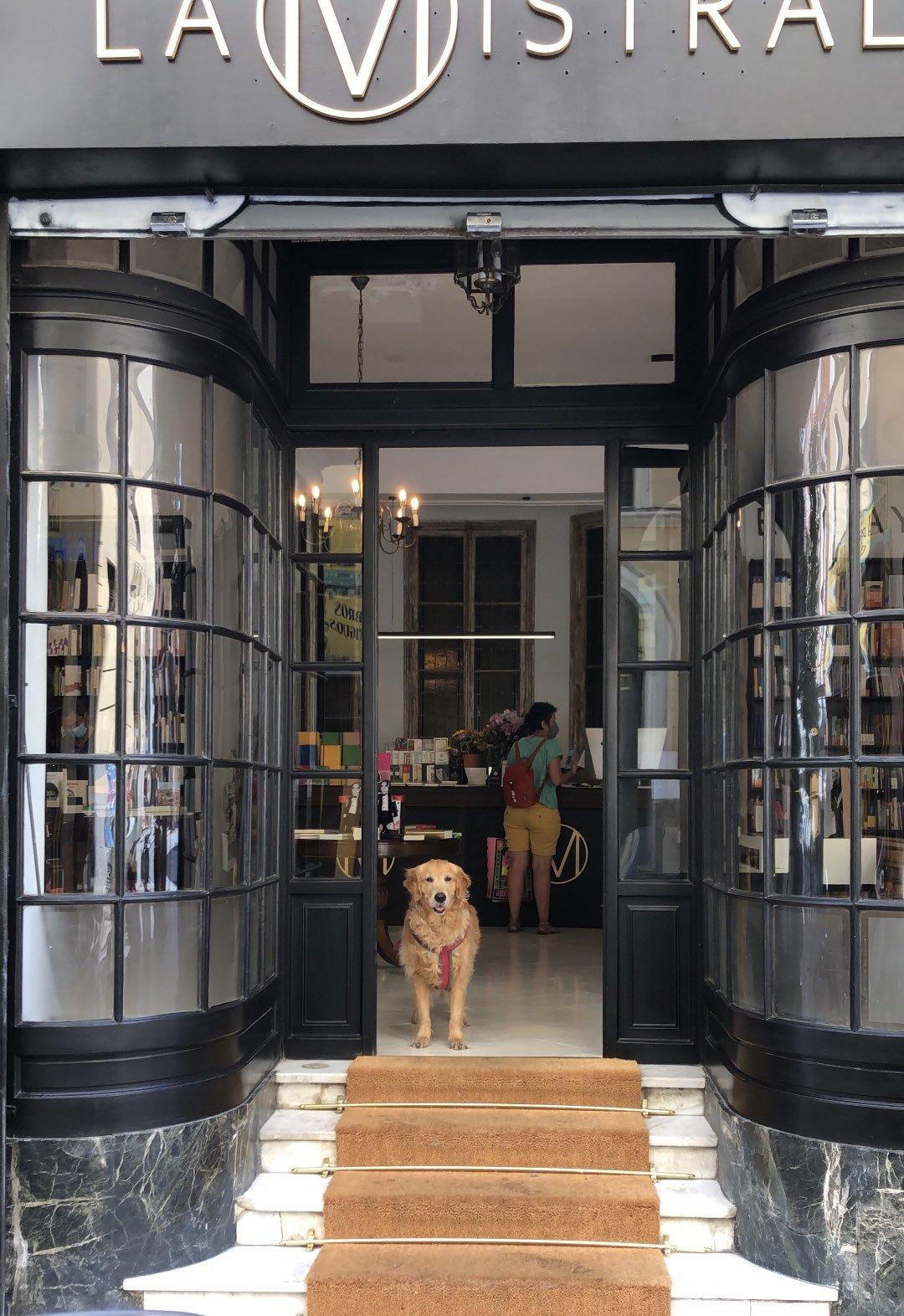 Aurora, la perra de Andrea Stefanoni, recibe a todos los visitantes de La Mistral.