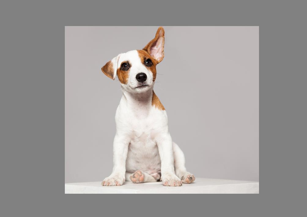 ¿Tu mascota cuenta con un seguro de salud? ¡Consigue el tuyo con SantéVet!