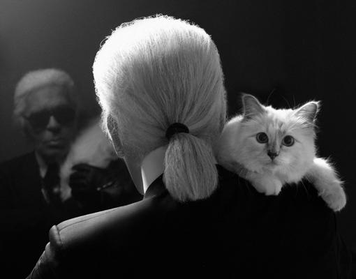 Choupette, un gato <em>celebrity</em> con costumbres de princesa