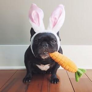 Karlie Kloss compartió una imagen de un perro disfrazado de conejo, zanahoria incluida.