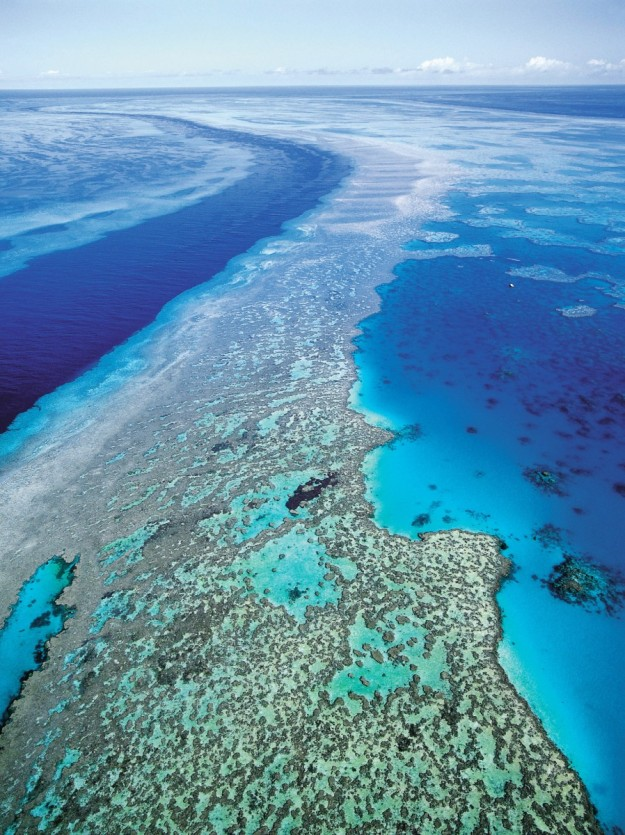 Gran barrera de coral australiana.