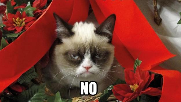 Gato hater.