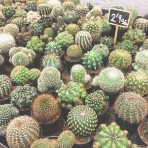 Cactus de Cacto-Cacto.